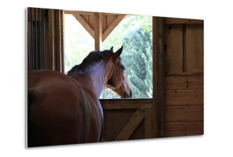 Horse in stall in rural Rappahannock County, Virginia, USA-Dennis Brack-Metal Print