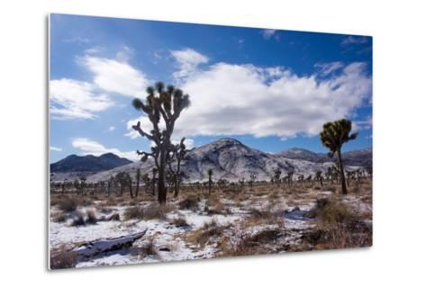 Joshua Trees and Snow Covered Mountains in Southern California-Ben Horton-Metal Print