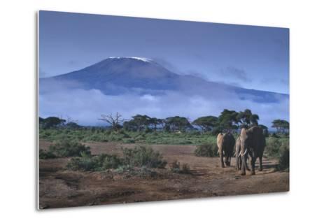 Elephants and Mountain-DLILLC-Metal Print