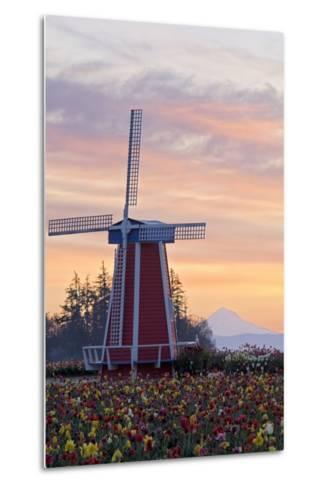 Sunrise over Wooden Shoe Tulip Farm and Mt. Hood; Woodburn, Oregon, USA-Design Pics Inc-Metal Print