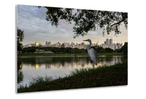 A Great Egret Looks Out over a Lake in Sao Paulo's Ibirapuera Park-Alex Saberi-Metal Print