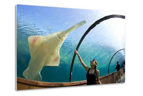 A Woman Points to a Carpenter Shark, or Sawfish, Swimming over an Underwater Tunnel-Mike Theiss-Metal Print