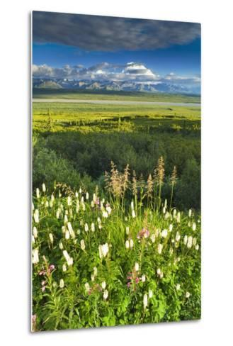 View of Mt Mckinley with Fireweed and Sitka Burnet Flowers-Design Pics Inc-Metal Print