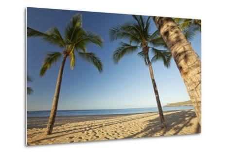 Hawaii, Lanai, Hulopoe Beach, Tall Palm Trees on a Beautiful Beach-Design Pics Inc-Metal Print