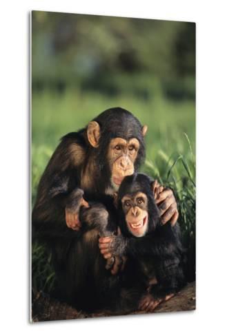 Happy Chimpanzee Family-DLILLC-Metal Print