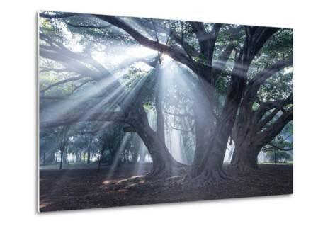 The Sun's Rays Shine Through Trees in Mist in Ibirapuera Park-Alex Saberi-Metal Print