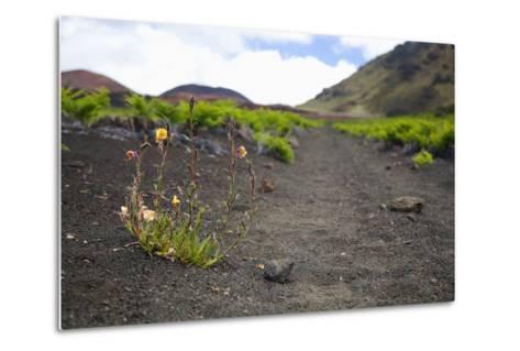 Hawaii, Maui, Haleakala, the Hiking Trail Through the Volcanic Crater-Design Pics Inc-Metal Print