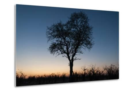 A Silhouetted Tree at Dusk in the Okavango Delta-Sergio Pitamitz-Metal Print