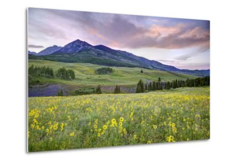USA, Colorado, Crested Butte. Landscape of wildflowers and mountain.-Dennis Flaherty-Metal Print