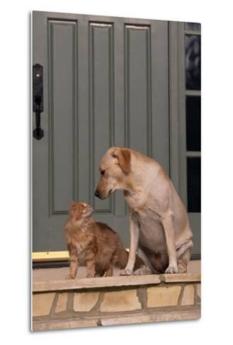 Cat and Labrador Sitting on Front Step-DLILLC-Metal Print