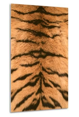 Tiger Fur-DLILLC-Metal Print