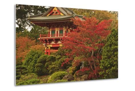 Japanese Tea Garden in Golden Gate Park; San Francisco California United States of America-Design Pics Inc-Metal Print