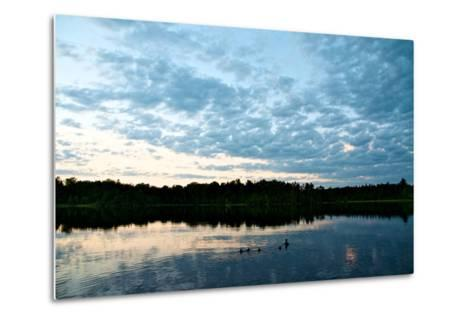 A Mallard Duck and Her Ducklings Swimming in a Pristine Lake at Sunrise-Heather Perry-Metal Print