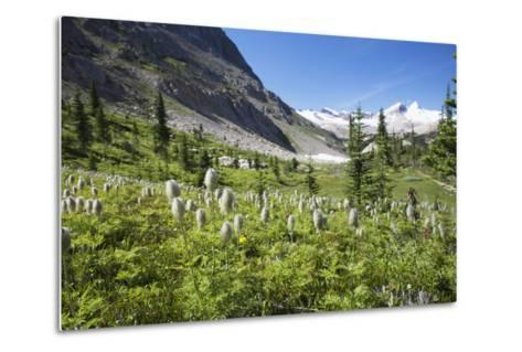 Mountain Meadow with Wildflowers and Glacier Mountains-Design Pics Inc-Metal Print