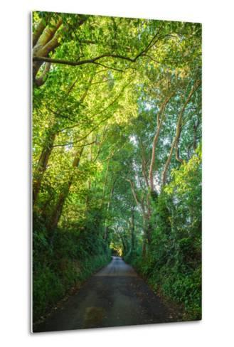Sunlight Filters Through a Canopy of Branches over a Country Lane Near the Village of Winchelsea-Roff Smith-Metal Print