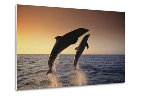 Dolphin Breaching the Oceans Surface-DLILLC-Metal Print