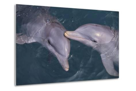 Dolphins-DLILLC-Metal Print