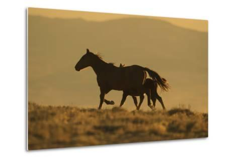Wild Horse Mother and Foal-DLILLC-Metal Print