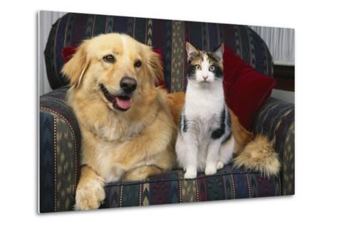 Cat and Dog Sitting Together-DLILLC-Metal Print