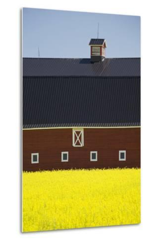 Front of a Red Barn in a Flowering Canola Field with Blue Sky South of High River; Alberta Canada-Design Pics Inc-Metal Print