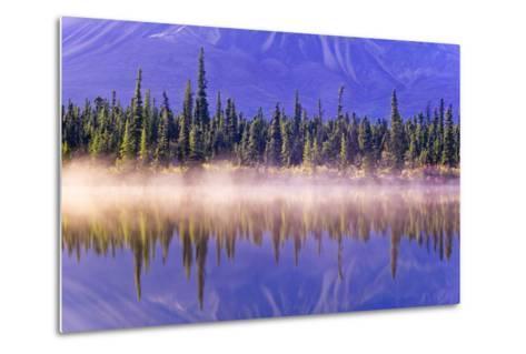 Forest Reflects-Design Pics Inc-Metal Print