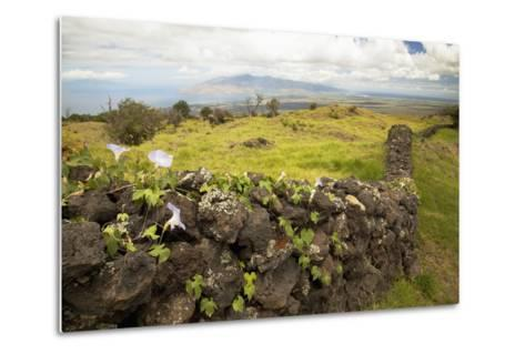 Hawaii, Maui, Kula, a Stone Wall Lines a Country Road-Design Pics Inc-Metal Print