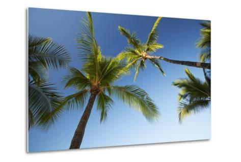Hawaii, Lanai, Hulope Beach, Plam Trees from Below-Design Pics Inc-Metal Print