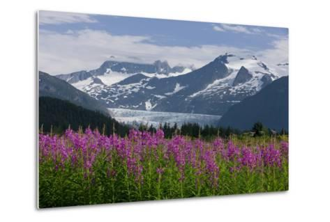 Scenic View of Mendenhall Glacier with Fireweed in the Foreground-Design Pics Inc-Metal Print