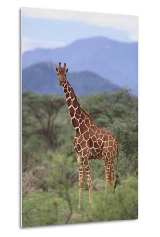 Giraffe-DLILLC-Metal Print