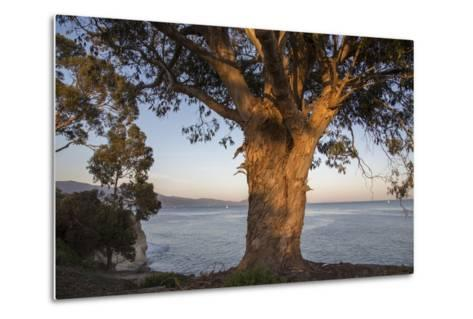 A Eucalyptus Tree Overlooking the Santa Barbara Channel-Macduff Everton-Metal Print