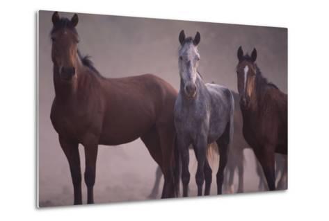 Quarter Horses-DLILLC-Metal Print
