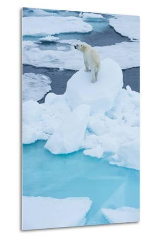 A Wary Polar Bear Mounted on Top of a Boulder of Drift Ice-Michael Melford-Metal Print