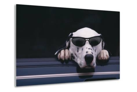 Dalmatian Wearing Sunglasses-DLILLC-Metal Print