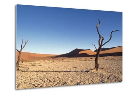 Desert Landscape-Design Pics Inc-Metal Print