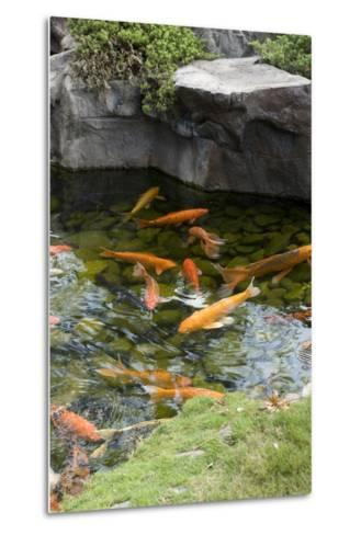Koi Pond-dosecreative-Metal Print