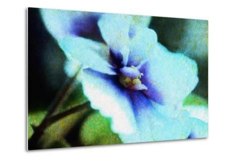 Violet-Andr? Burian-Metal Print