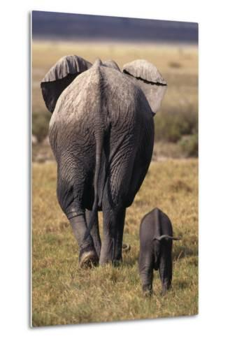 Mother and Baby Elephant-DLILLC-Metal Print