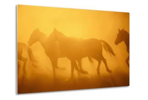 Wild Horses-DLILLC-Metal Print