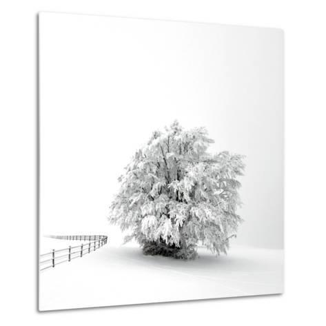White is back-Philippe Sainte-Laudy-Metal Print