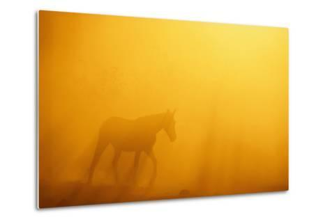 Wild Horse-DLILLC-Metal Print