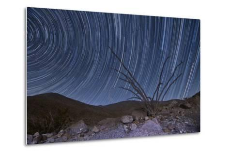 An Octotillo Backdropped by Star Tails in Anza Borrego Desert State Park--Metal Print