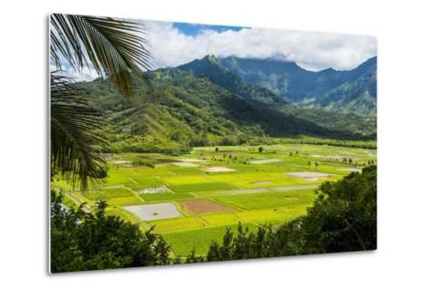 Taro Fields Near Hanalei on the Island of Kauai, Hawaii, United States of America, Pacific-Michael Runkel-Metal Print