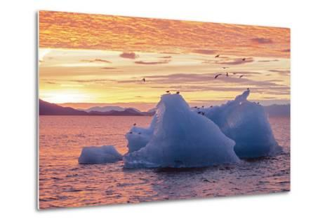 Blue Glacial Ice Floating at Sunset with Gulls-Rich Reid-Metal Print