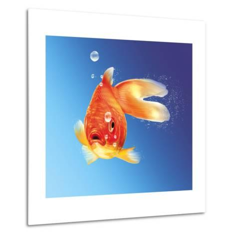 Goldfish with Water Bubbles--Metal Print