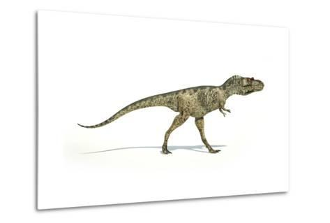 Albertosaurus Dinosaur on White Background--Metal Print