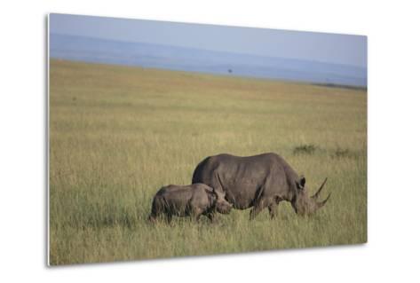 Black Rhinoceros-DLILLC-Metal Print