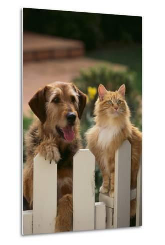 Dog and Cat Waiting beside the Fence-DLILLC-Metal Print