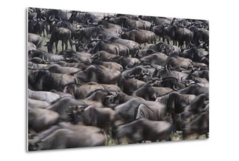 Wildebeest-DLILLC-Metal Print