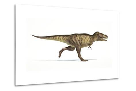 Tyrannosaurus Rex Dinosaur on White Background--Metal Print