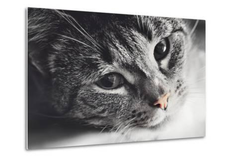 Cute Cat Lying in Lazy, Sleepy Pose Looking at the Camera with its Magnetic Eyes. close Portrait. B-Michal Bednarek-Metal Print